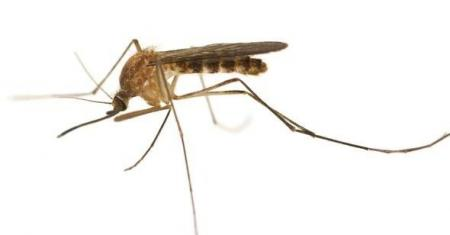 Fourth Case Of West Nile Virus In Montgomery County